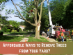 ways to remove tree from yard