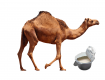 top 5 benefits of camel milk